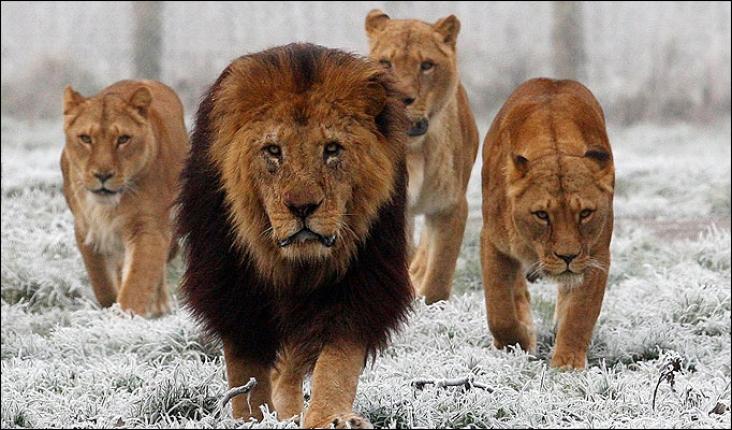 Belirsiz Durumlarda Kendine Güvenen Bir Lider Nasıl Olunur?1